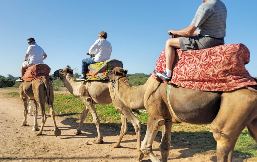 Camel riding in the countryside, Agadir, Morocco