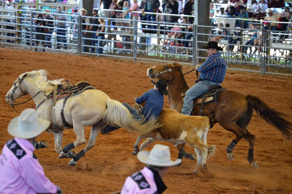 A cowboy tackles a steer