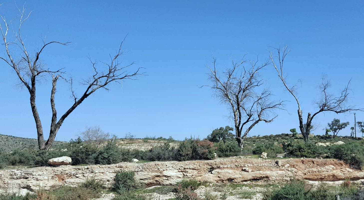 Moroccan Desolate Countryside, Three Trees