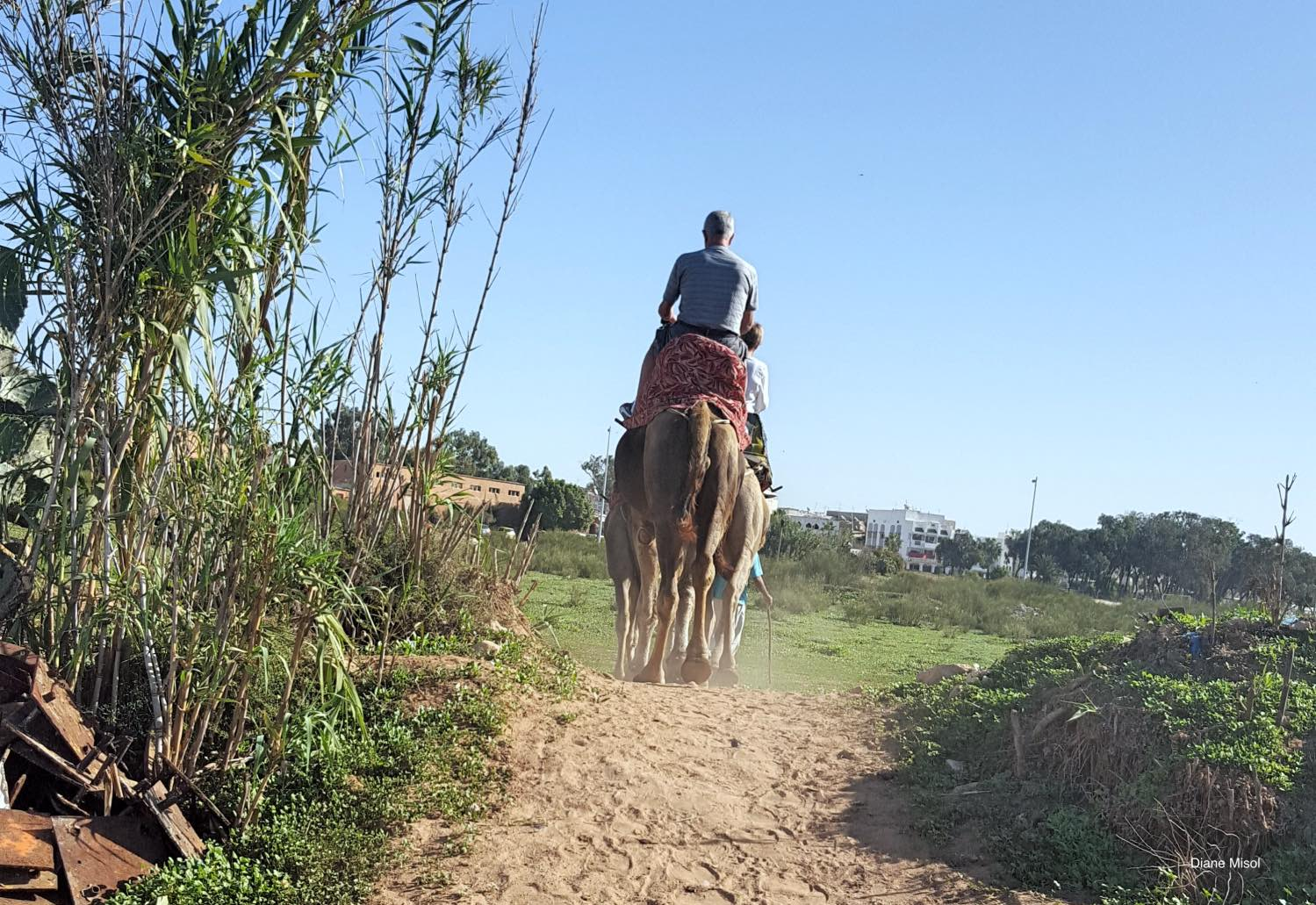 Riding Camels Morocco
