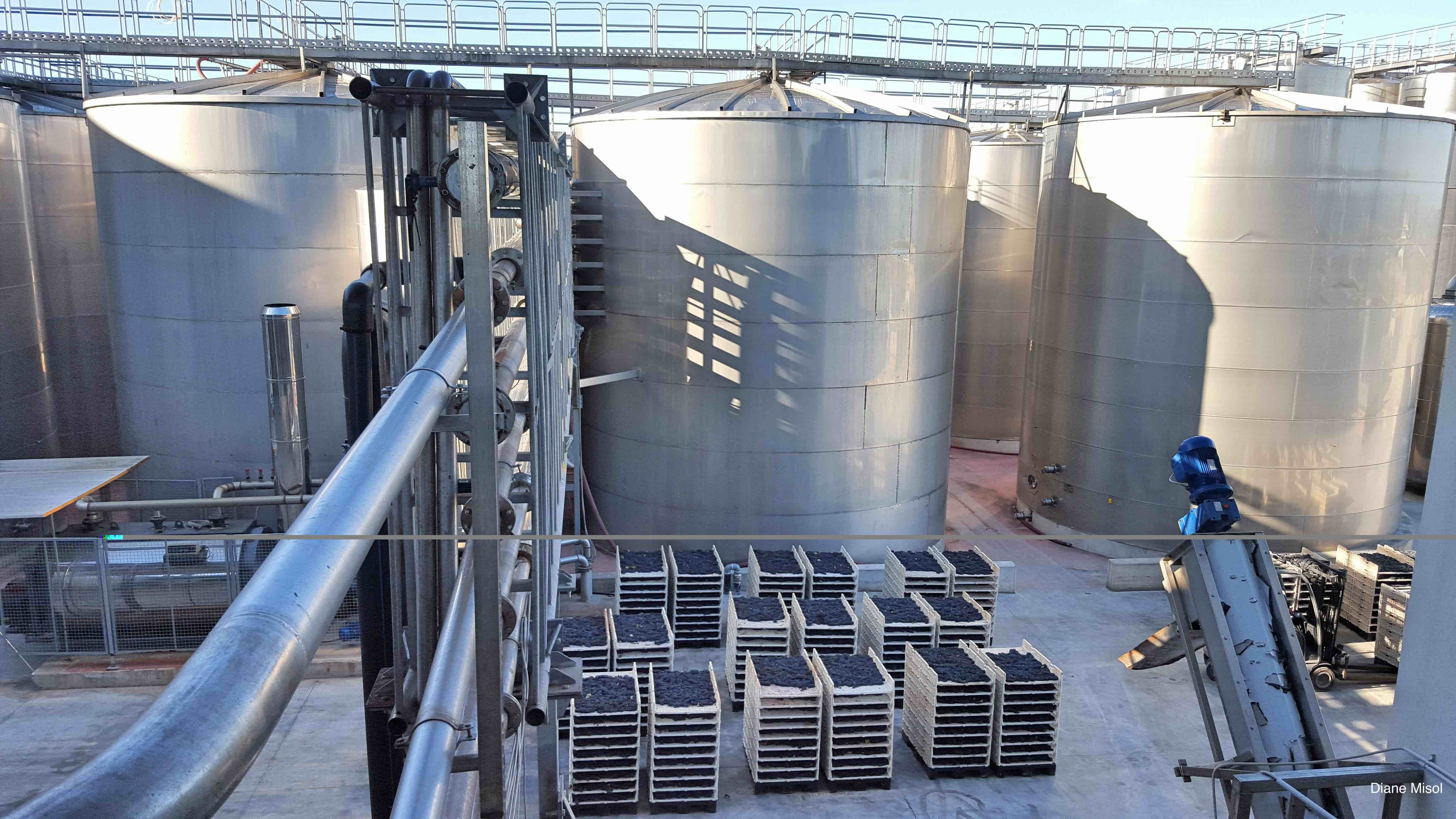 Crates of grapes beside huge wine tanks, Italy