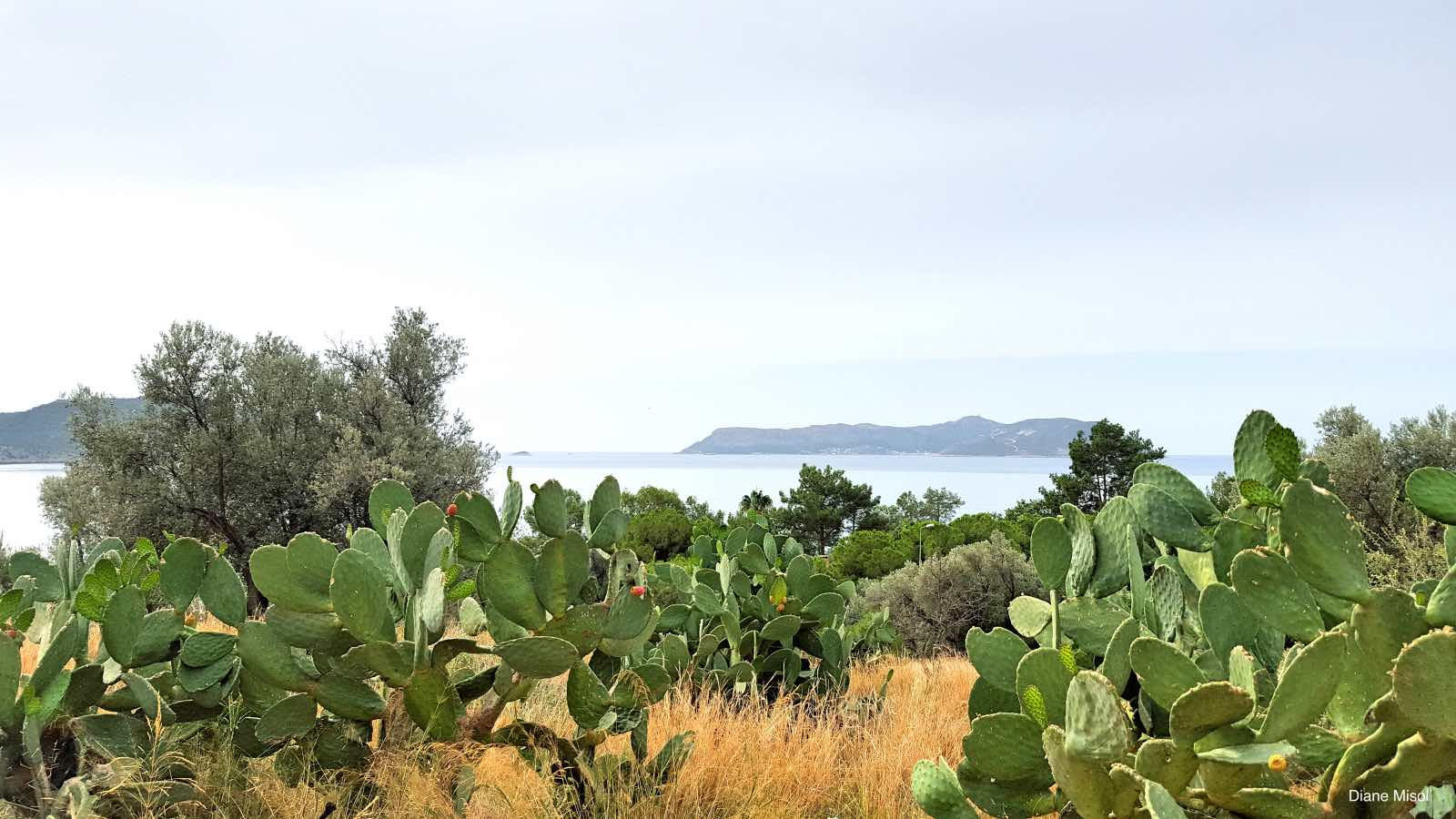 Cacti and Islands, Kas, Turkey