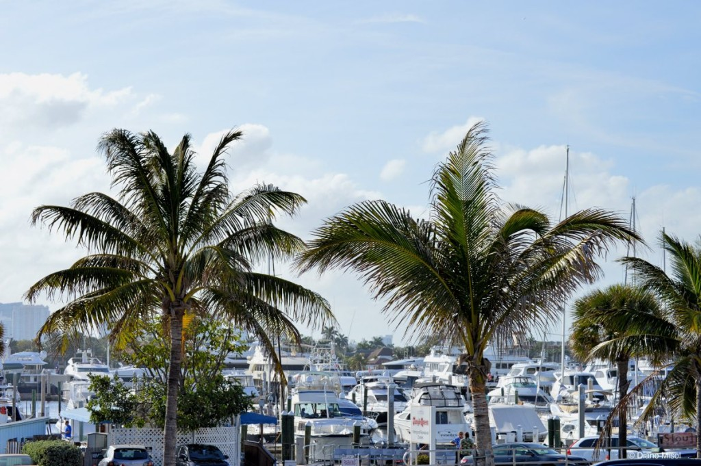 View of the Harbour, Fort Lauderdale Beach, Florida
