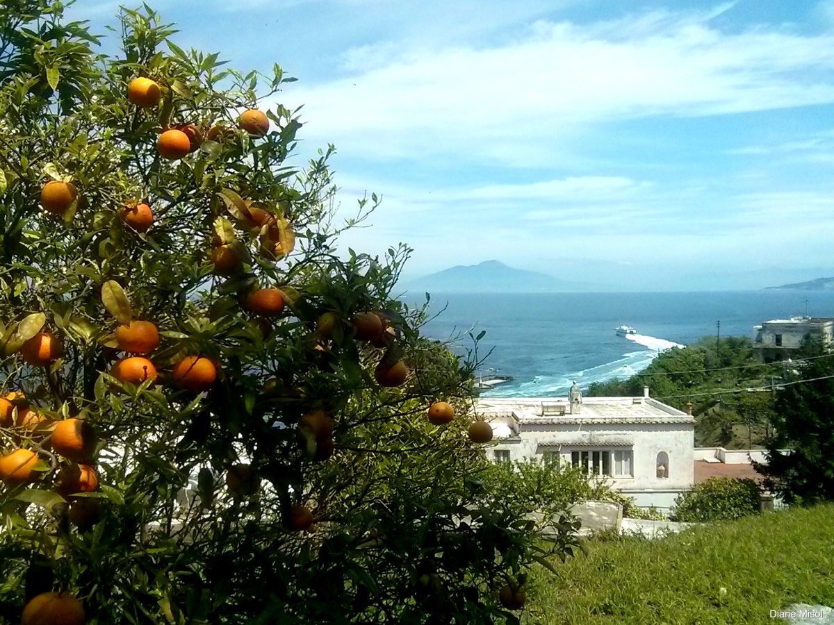 Orange Tree, Capri, Italy