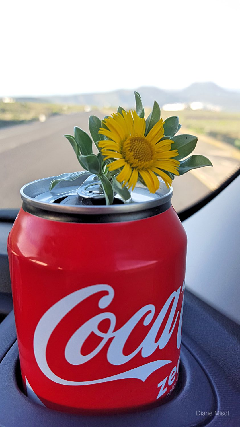 Cola can with Flower in car - Road Tour! Lanzarote