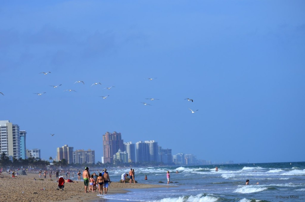 Waves and Gulls, Fort Lauderdale Beach, Florida