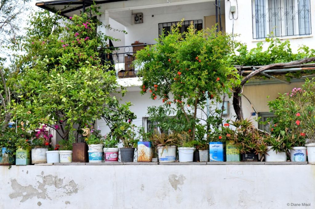Yogurt Container Gardening! Bodrum, Turkey