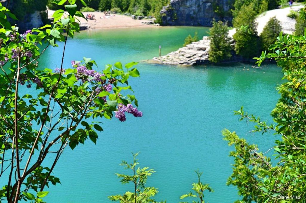 Lilacs, Beach, and Turquoise Green Water. Elora Quarry, Ontario, Canada
