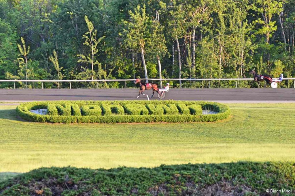 Mohawk Racetrack, Horses Warming Up. Ontario, Canada