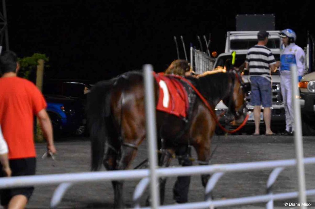 Night Scene of Horse, Trainer, Driver. Ontario, Canada