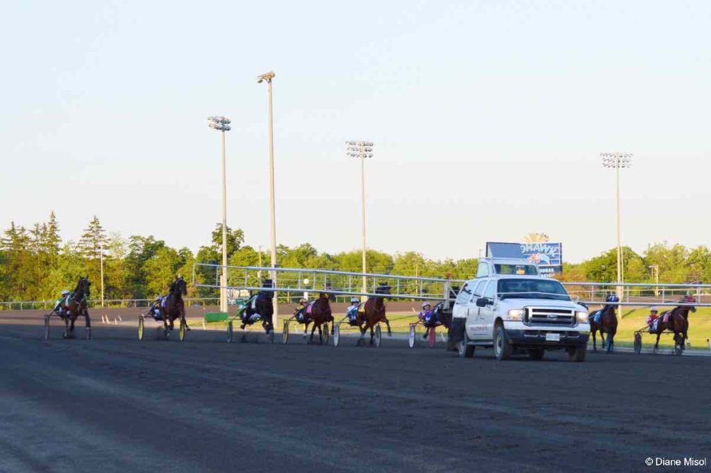 Starting Gate and Race Horses. Mohawk Racetrack, Ontario, Canada