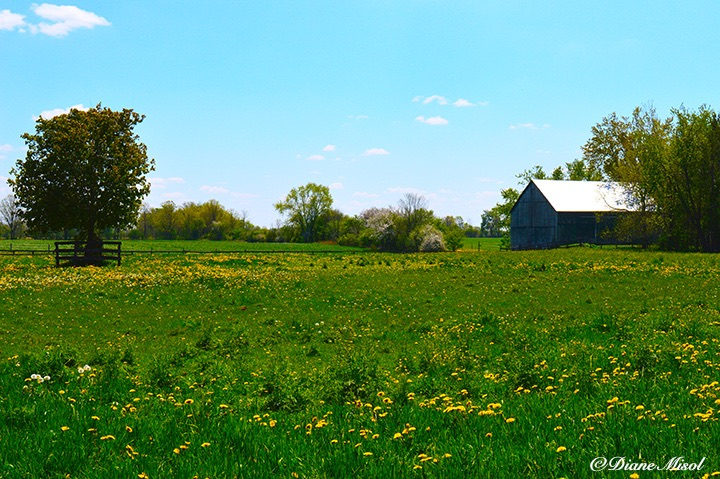 Fields of Middlebrook Stables. Ontario, Canada