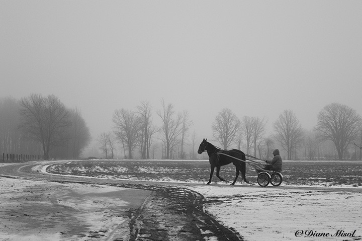 Jogging the Horse on a snowy day. Middlebrook Stables, Ontario