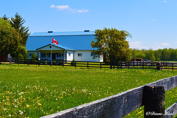 Middlebrook Stables Horse Barn. Ontario, Canada
