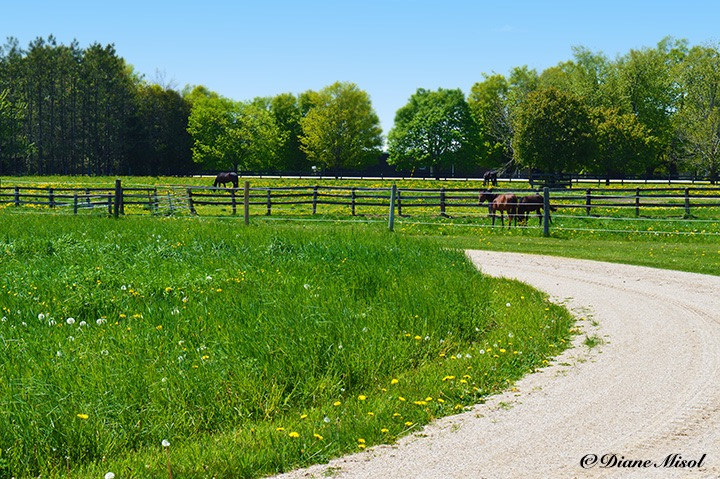 Paddocks and Race Track. Middlebrook Stables, Elora, Ontario