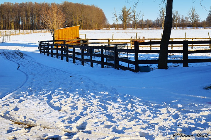 Snow Covered Paddocks. Middlebrook Stables, Ontario, Canada
