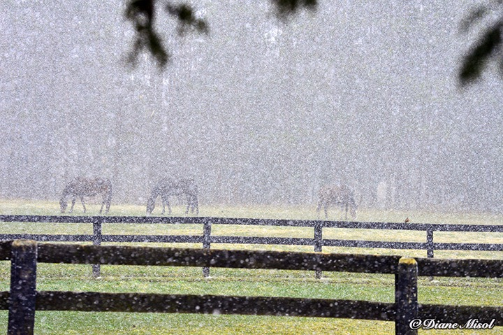 Snow gently falls on the Horse Paddock of Middlebrook Stables.
