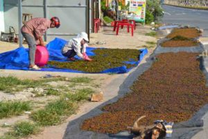 Drying Pepper at the Side of the Road - Phu Quoc, Vietnam