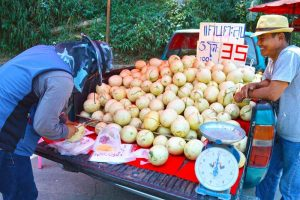 Roadside Melon Treat - Chiang Rai, Thailand
