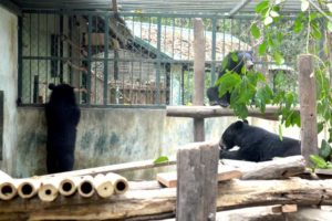 Three Bears - Luang Prabang Bear Sanctuary, Laos