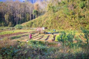 Vegetable Farm - Laos