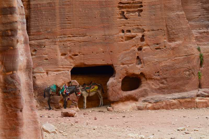 Donkeys in wait - Petra - 0129