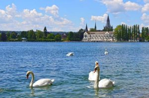 Geese on the Bodensee - Germany -0027-1