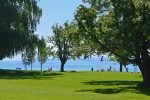 Grass Area - Hoernle Beach - Konstanz, Germany, Bodensee -0178