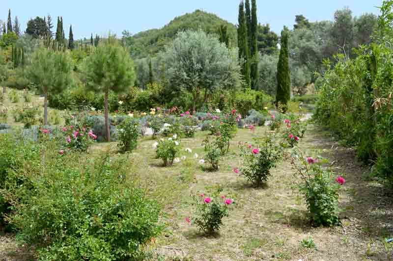 Olympic Botanical Gardens - Olympia, Greece - 0361