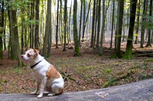 Fritz Dog - Hiking Jasmund National Park - Ruegen, Germany