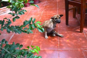 Gia Thanh Guest House Mascot - Phu Quoc, Vietnam