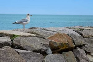 Seagull - Baltic Sea, Ruegen, Germany