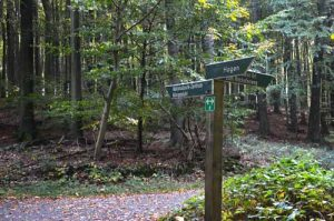 Trail Signs in Jasmund National Park - Ruegen, Germany