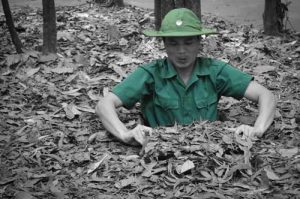 Cu Chi Tunnels - Ho Chi Minh Must Do List - Vietnam