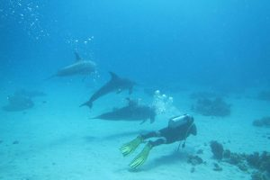 Dolphins, Red Sea Diving - Hurghada, Egypt
