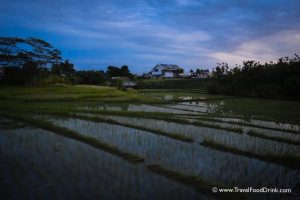 Dusk - Rice Fields, Canggu, Bali