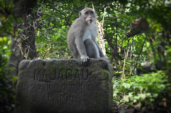 Sacred Monkey Forest Burial Ground