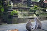 Temple - Sanctuary of the Sacred Monkey Forest - Ubud, Bali